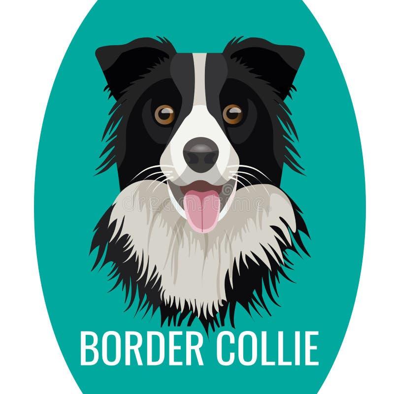 Animale domestico di border collie isolato sull'illustrazione bianca di vettore illustrazione di stock