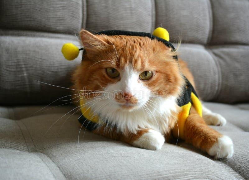 Animale domestico rosso del gatto in costume immagine stock