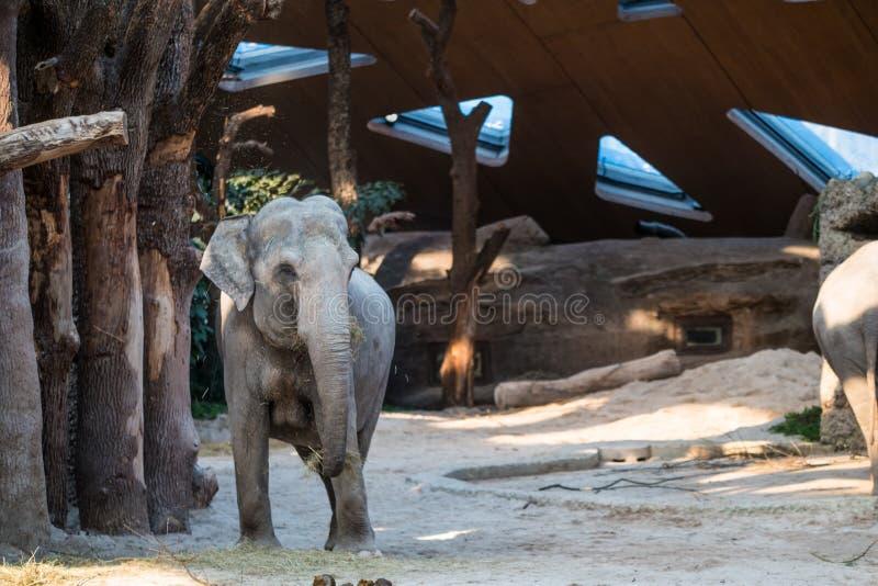 Animale grande e grigio che sta davanti agli alberi immagini stock libere da diritti