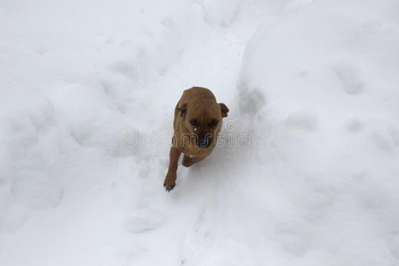 Animale grazioso di inverno della neve del cane immagini stock libere da diritti