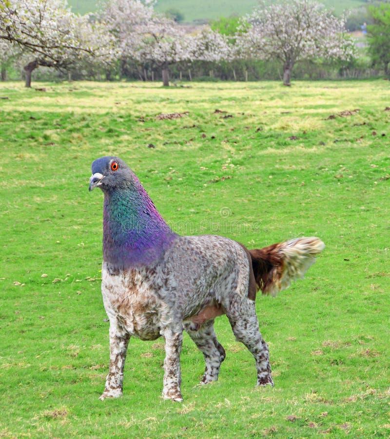 Animale ibrido sconosciuto insolito degli animali della creatura dell'uccello del laboratorio di prova di scienza del pericolo di immagini stock