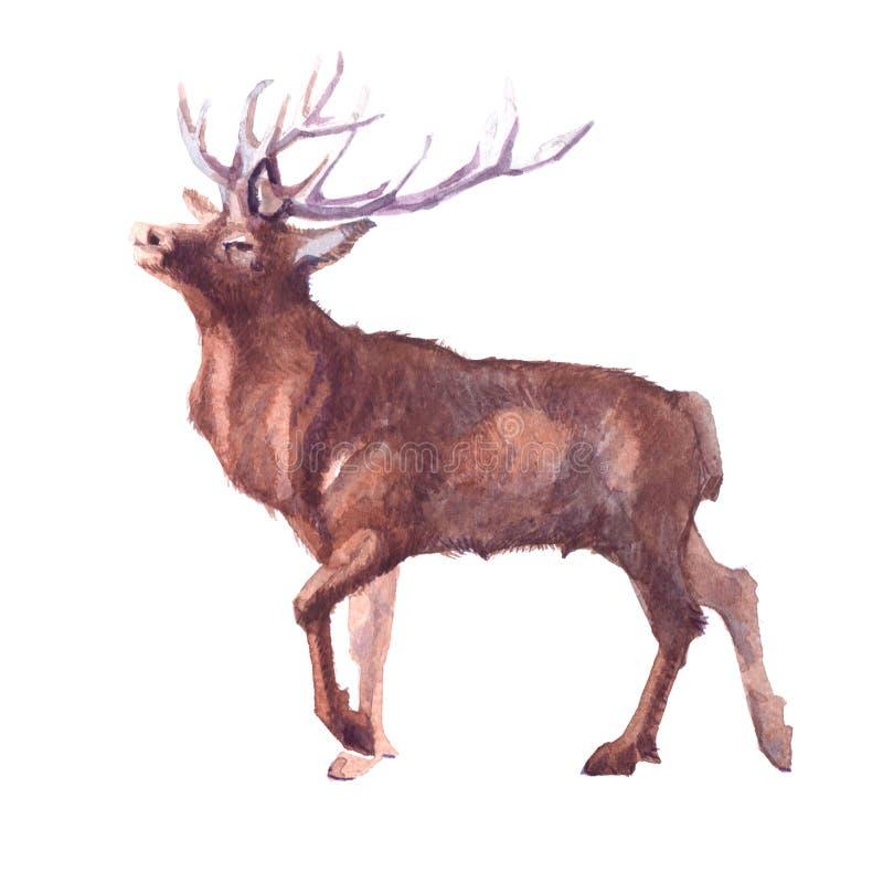Animale realistico della foresta dei cervi dell'acquerello isolato illustrazione vettoriale