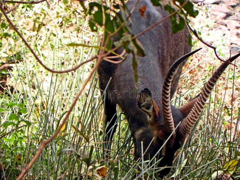 Animale selvatico fotografia stock