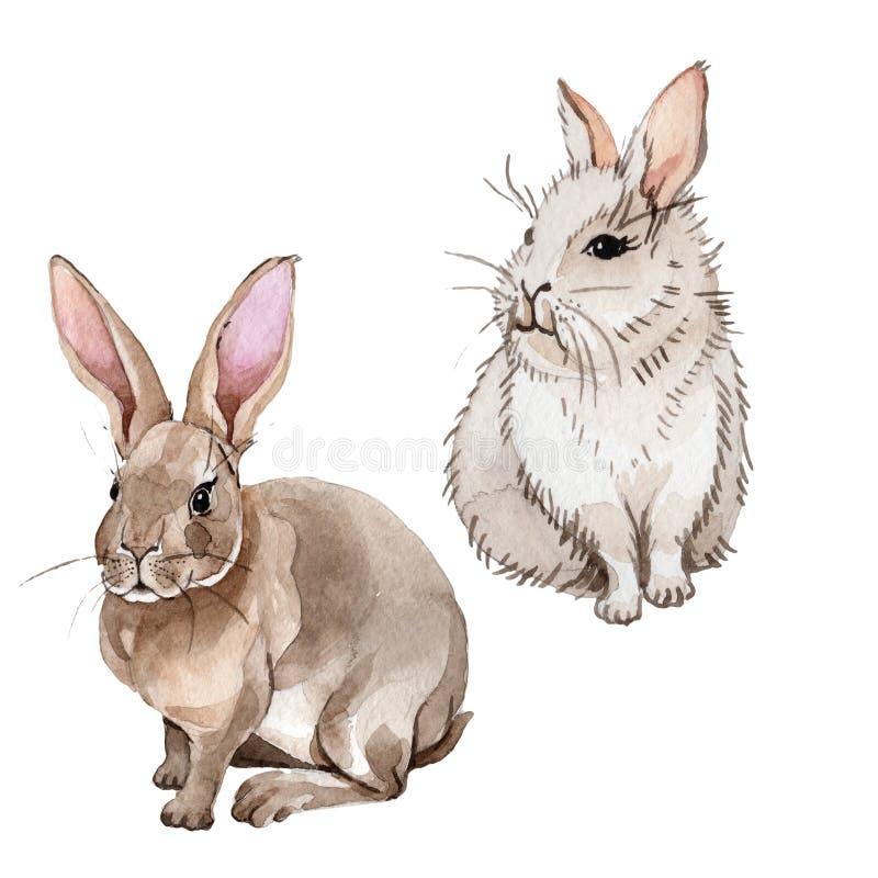Animale selvatico del coniglio in uno stile dell'acquerello isolato royalty illustrazione gratis