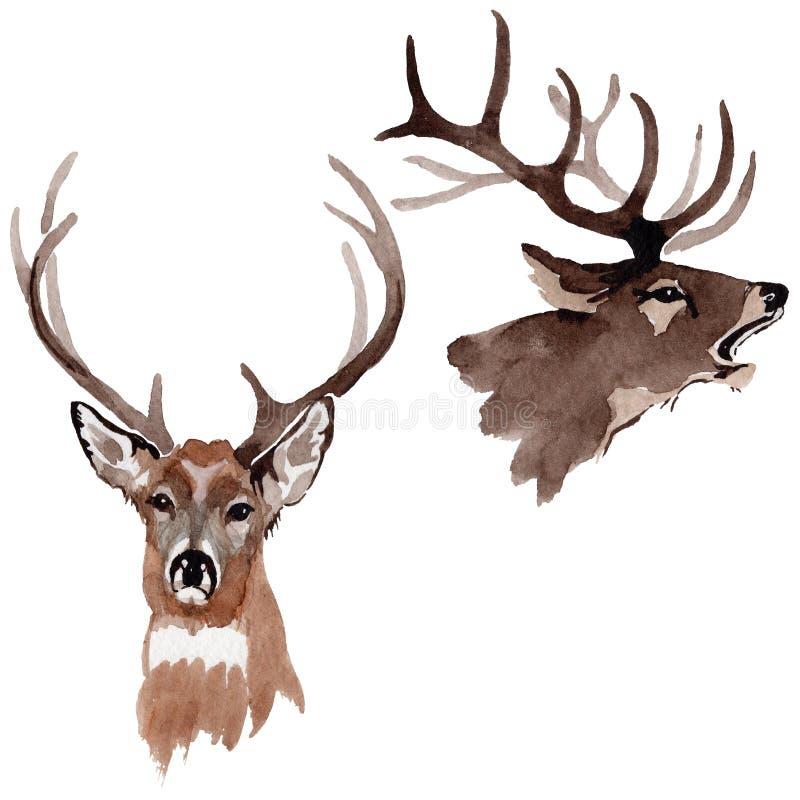 Animale selvatico della renna in uno stile dell'acquerello isolato royalty illustrazione gratis