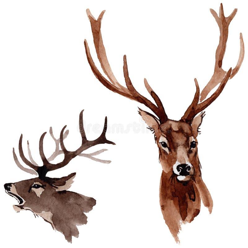 Animale selvatico della renna in uno stile dell'acquerello isolato illustrazione di stock