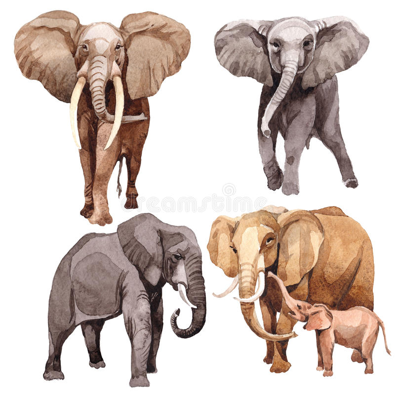 Animale selvatico esotico dell'elefante in uno stile dell'acquerello isolato illustrazione di stock
