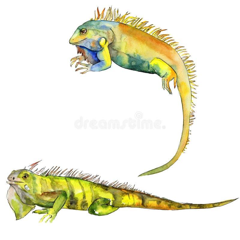 Animale selvatico esotico dell'iguana in uno stile dell'acquerello Insieme dell'illustrazione del fondo Elemento isolato dell'ill illustrazione di stock