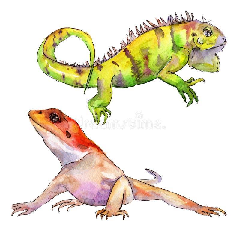Animale selvatico esotico dell'iguana in uno stile dell'acquerello Insieme dell'illustrazione del fondo Elemento isolato dell'ill royalty illustrazione gratis