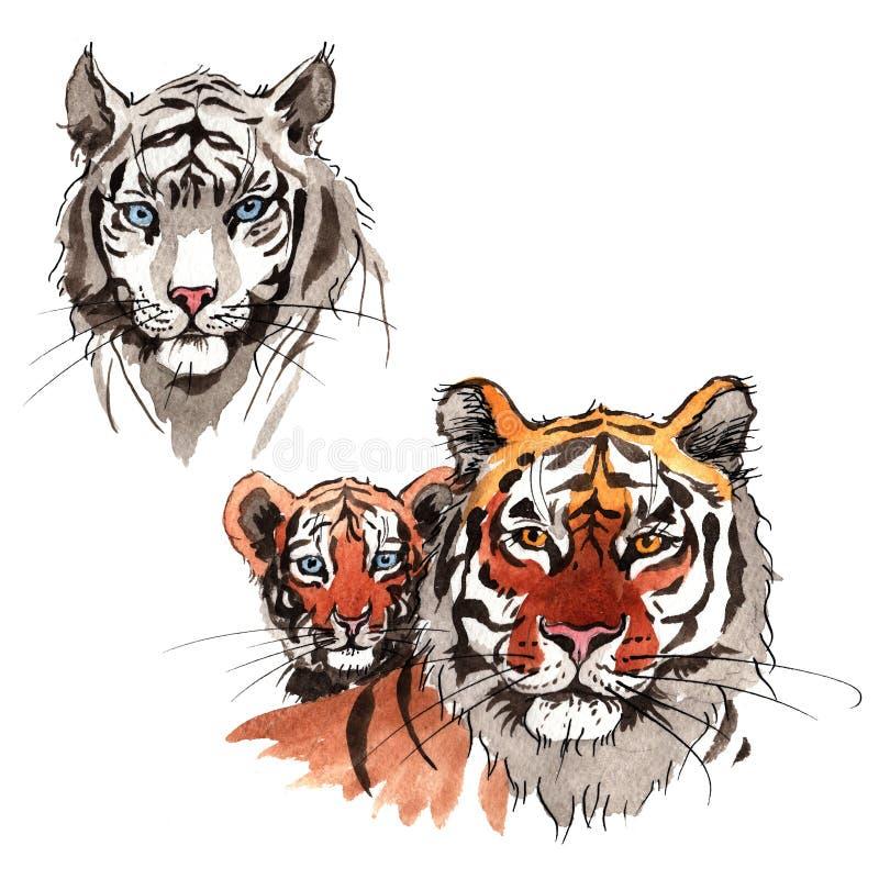 Animale selvatico esotico della tigre in uno stile dell'acquerello isolato illustrazione vettoriale