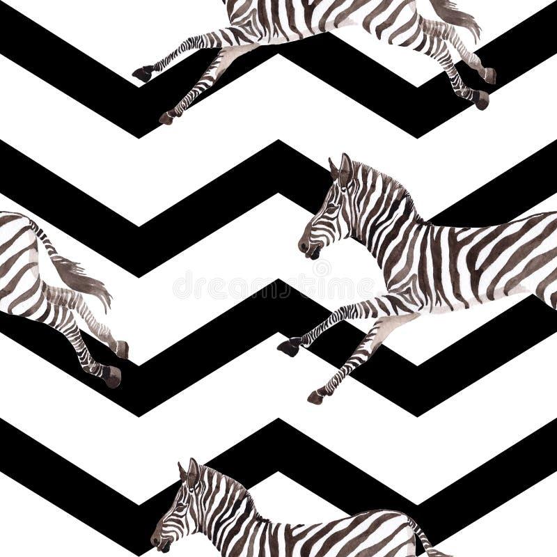 Animale selvatico esotico della zebra in uno stile dell'acquerello Insieme dell'illustrazione del fondo dell'acquerello Modello s illustrazione vettoriale