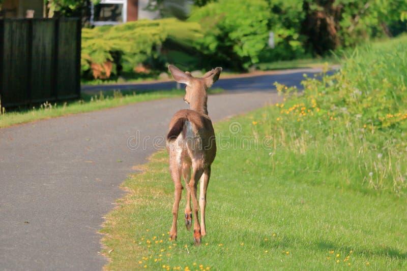 Animale selvatico nell'ambiente della citt? fotografia stock