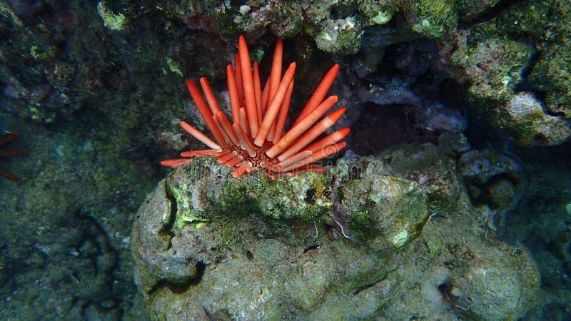 Animale subacqueo in acqua tropicale immagine stock libera da diritti