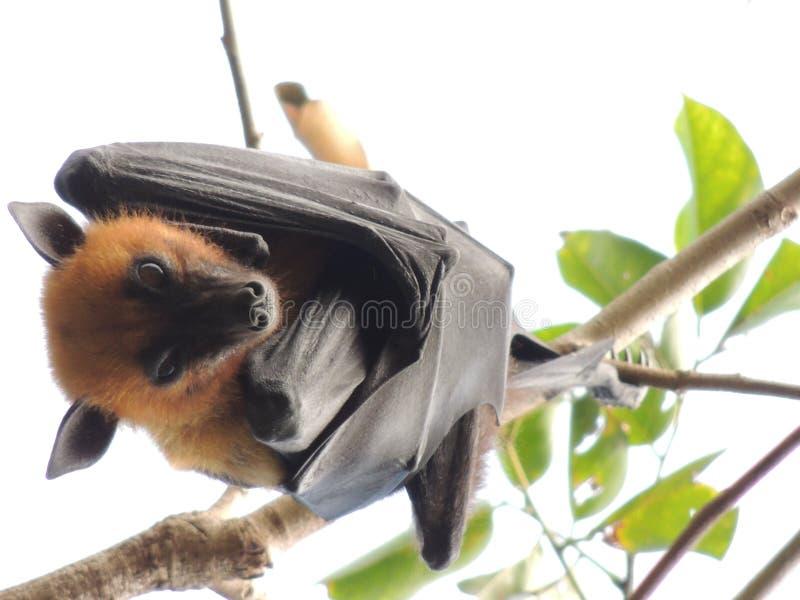 Animales foto de archivo libre de regalías