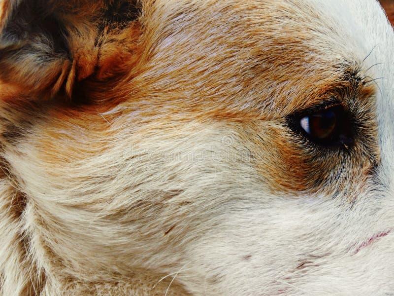 Animales imágenes de archivo libres de regalías