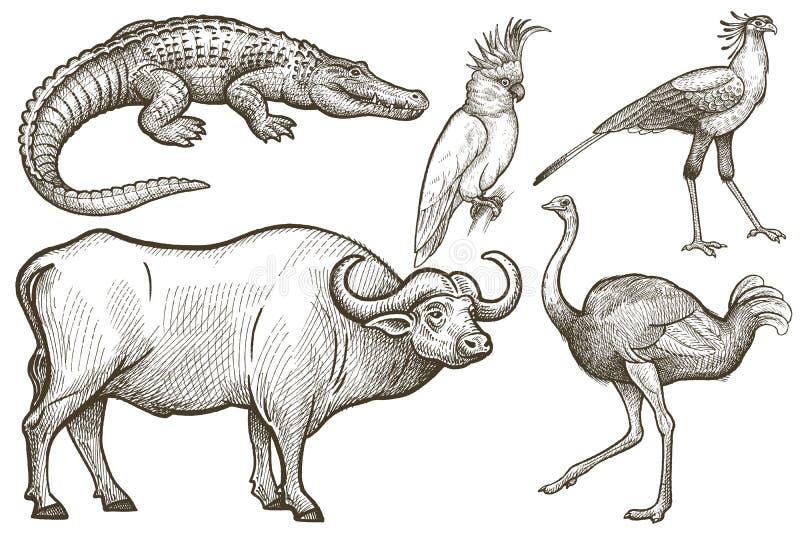 Animales africanos y pájaros fijados ilustración del vector