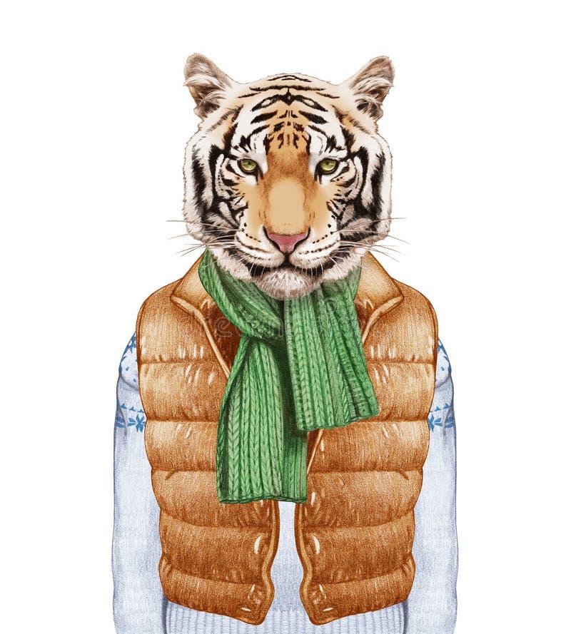 Animales como ser humano El tigre en abajo concede, suéter y bufanda stock de ilustración