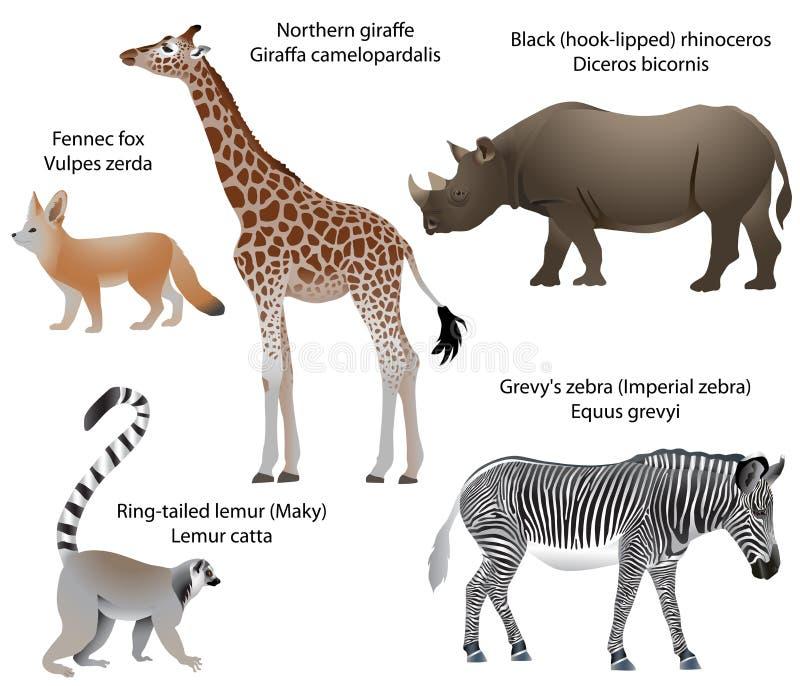 Animales De África: Jirafa, Rinoceronte, Cebra, Lémur, Fennec ...