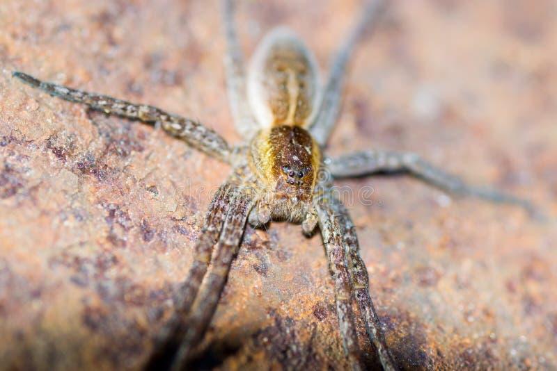 Animales de animales domésticos de la araña fotografía de archivo