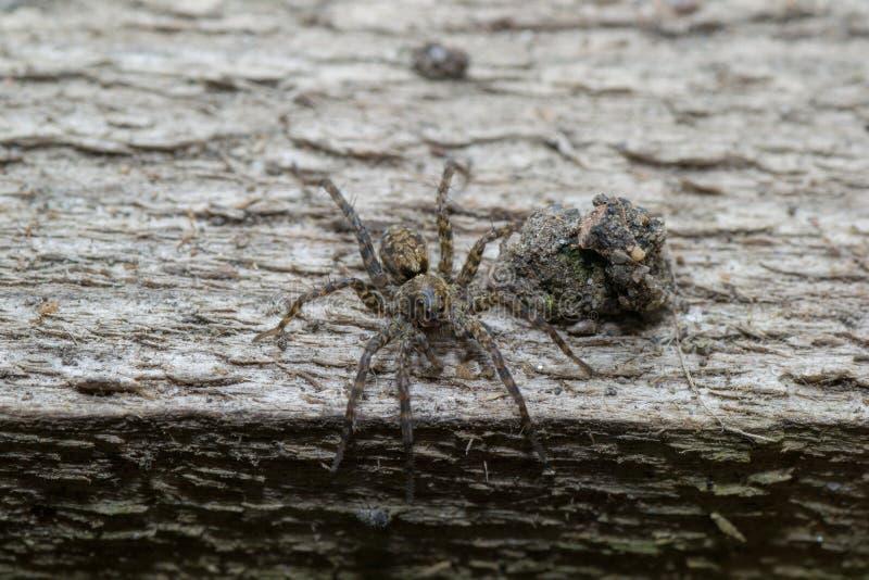 Animales de animales domésticos de la araña imagen de archivo