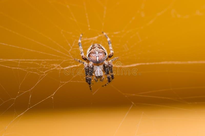 Animales de animales domésticos de la araña imágenes de archivo libres de regalías