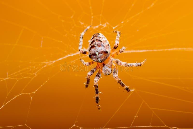 Animales de animales domésticos de la araña fotos de archivo