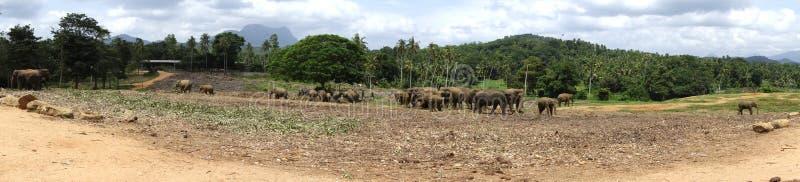Animales de la selva de la naturaleza de las nubes de los elefantes foto de archivo