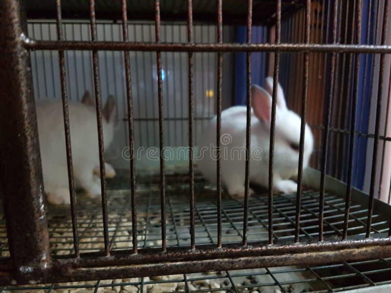Animales de la tienda de animales dos de la jaula del conejo foto de archivo