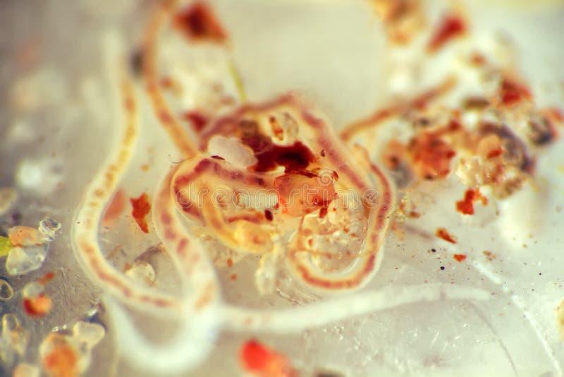 animales de la zona de marea de los mares fotos de archivo libres de regalías