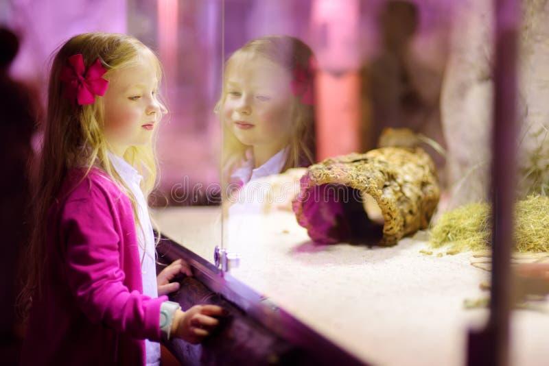 Animales de observación de la niña linda en el parque zoológico Animales de observación del parque zoológico del niño a través de imágenes de archivo libres de regalías