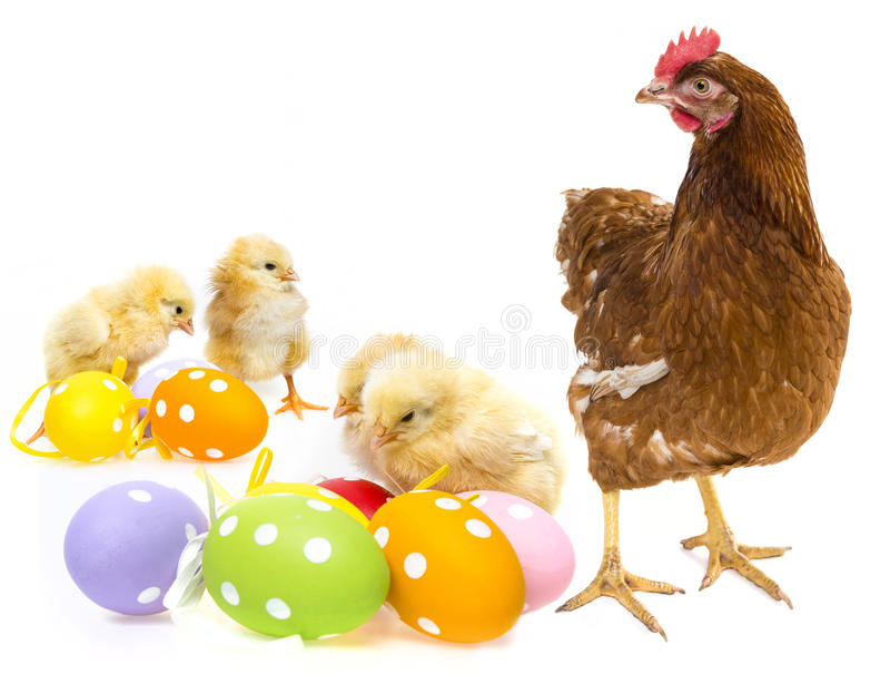 Animales de Pascua imágenes de archivo libres de regalías