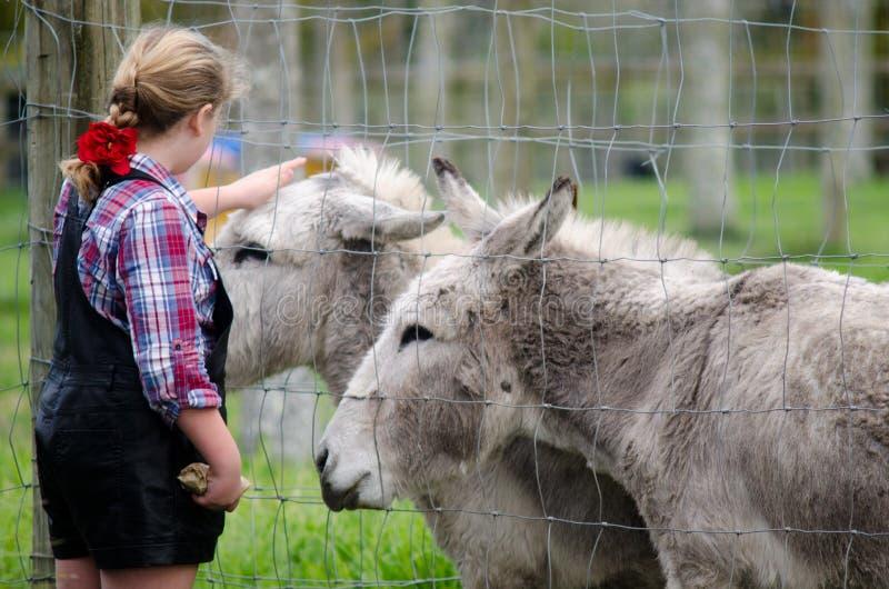 Animales del campo - burro fotos de archivo