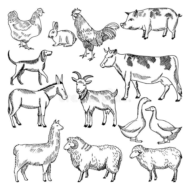 Animales del campo del vintage Cultivo de estilo dibujado del ejemplo a disposición ilustración del vector