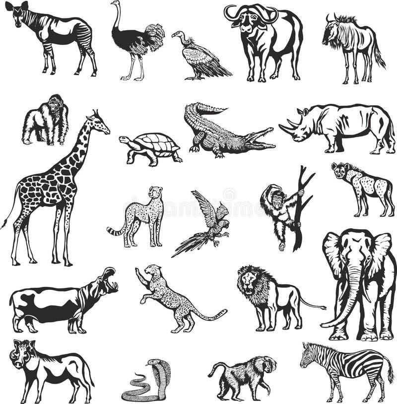 Animales del continente africano libre illustration