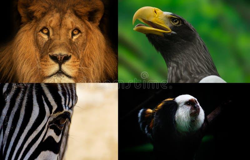 Animales del grupo imágenes de archivo libres de regalías