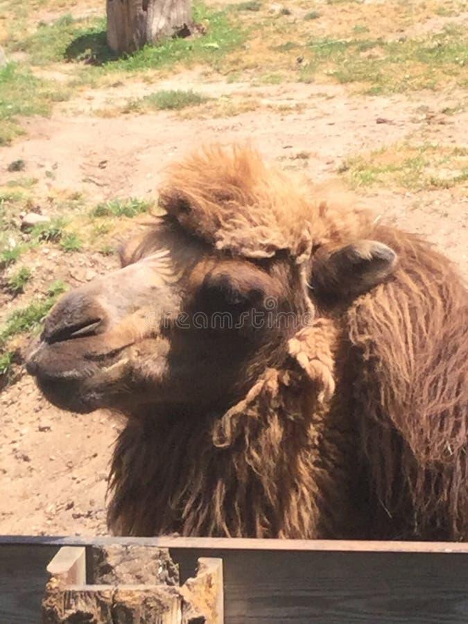 Animales Del Parque Zoológico Dominio Público Y Gratuito Cc0 Imagen