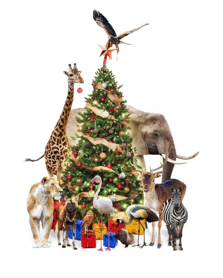 Animales del parque zoológico que adornan el árbol de navidad foto de archivo