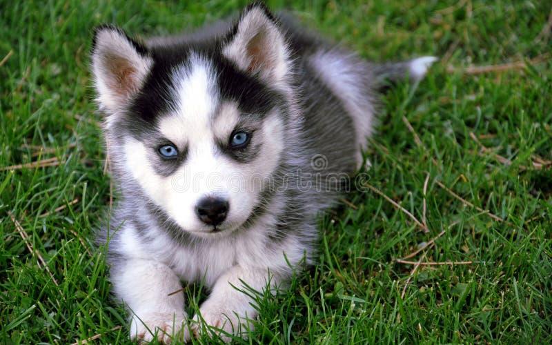 Animales del perro imagenes de archivo
