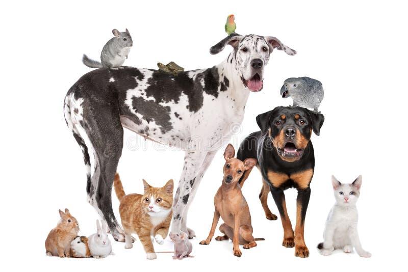 Animales domésticos delante de un fondo blanco imagenes de archivo