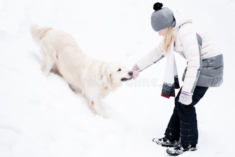 Animales domésticos en la naturaleza - juegos hermosos del golden retriever con el dueño con un palillo en un bosque nevado del i foto de archivo