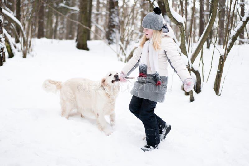 Animales domésticos en la naturaleza - juegos hermosos del golden retriever con el dueño con un palillo en un bosque nevado del i foto de archivo libre de regalías