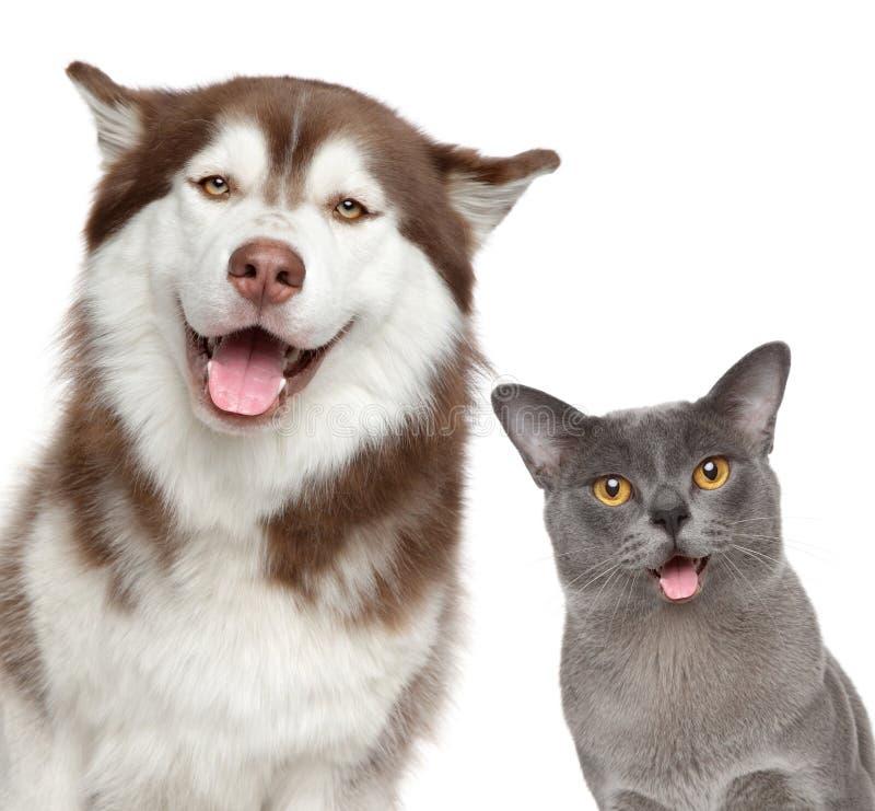 Animales domésticos felices en el fondo blanco fotos de archivo libres de regalías