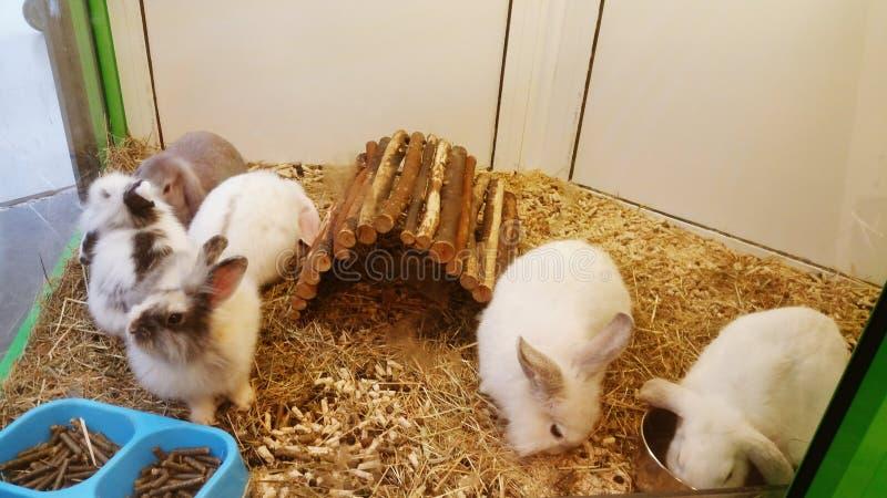 Animales domésticos perezosos imagen de archivo libre de regalías