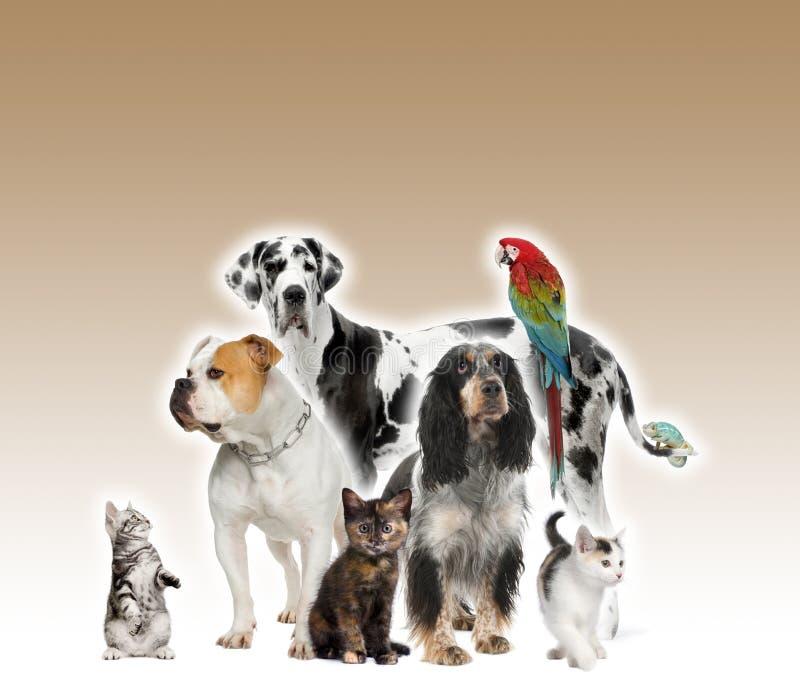 Animales domésticos que se colocan delante de fondo marrón fotos de archivo libres de regalías