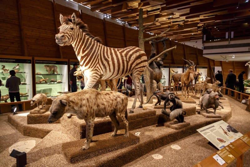 Animales en el Museo Nacional fotos de archivo
