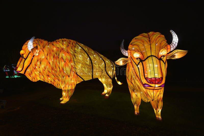 Animales en la noche del Jardin des Plantes fotografía de archivo libre de regalías