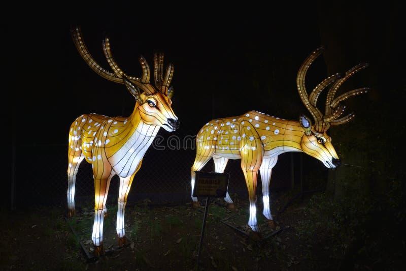 Animales en la noche del Jardin des Plantes imagen de archivo