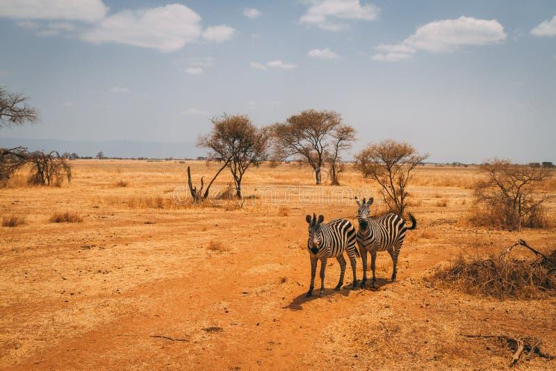 Animales en safari en Tanzania imágenes de archivo libres de regalías