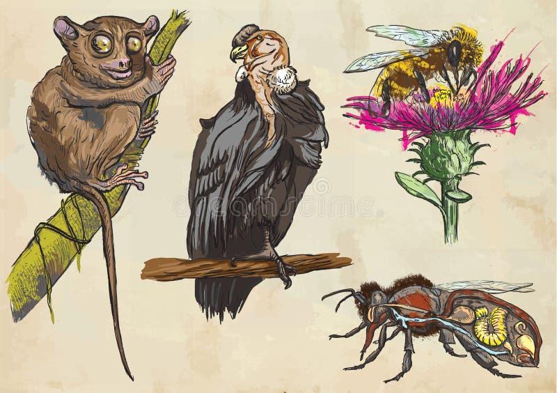 Animales - paquete coloreado del vector Freehands ilustración del vector