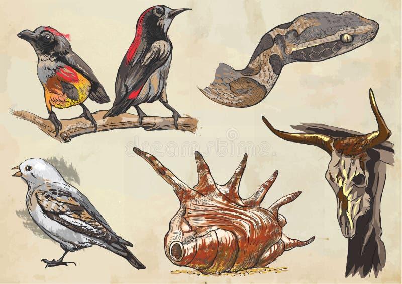 Animales - paquete coloreado del vector Freehands stock de ilustración